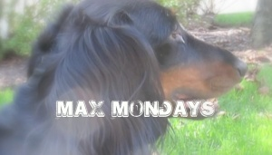 Max Mondays!  Click Picture to See What Max Thinks!